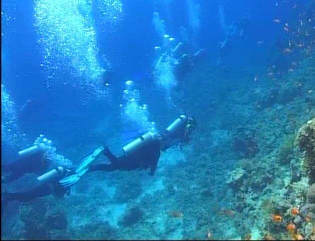 http://www.dive-instruktor.narod.ru/images/_001_02_1.jpg